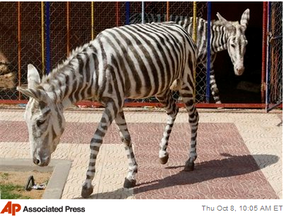 Faksimile fra Yahoonews